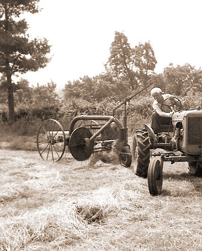 Bill, hay turning, driving the old Allis-Chalmers, c.1965.