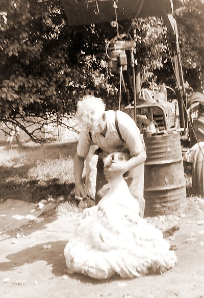 Bill sheep shearing, using the old Allis-Chalmers, Sidbury 1969.